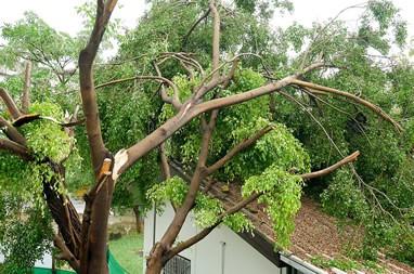 Storm Restoration